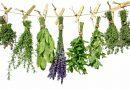 Erken menapoz için bitkisel çözüm