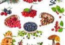 Yabani meyveler şifa kaynağı